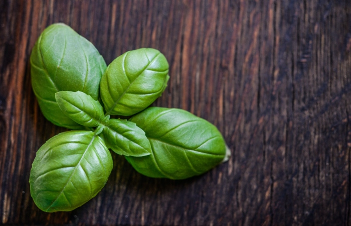 Basil - Fat Burner Herbs