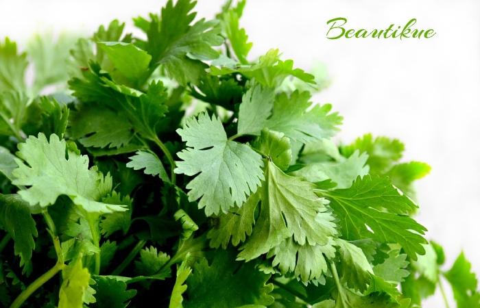 Parsley - Fat Burner Herbs